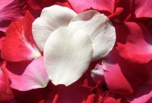 Rose Water - benefits skin - Making Soap Naturally